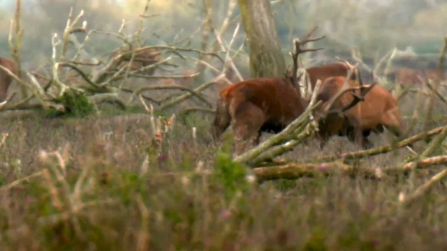 Staatsbosbeheer: nieuwe wildernis